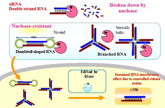 Figure 2 RNA interference by nano-structured RNA