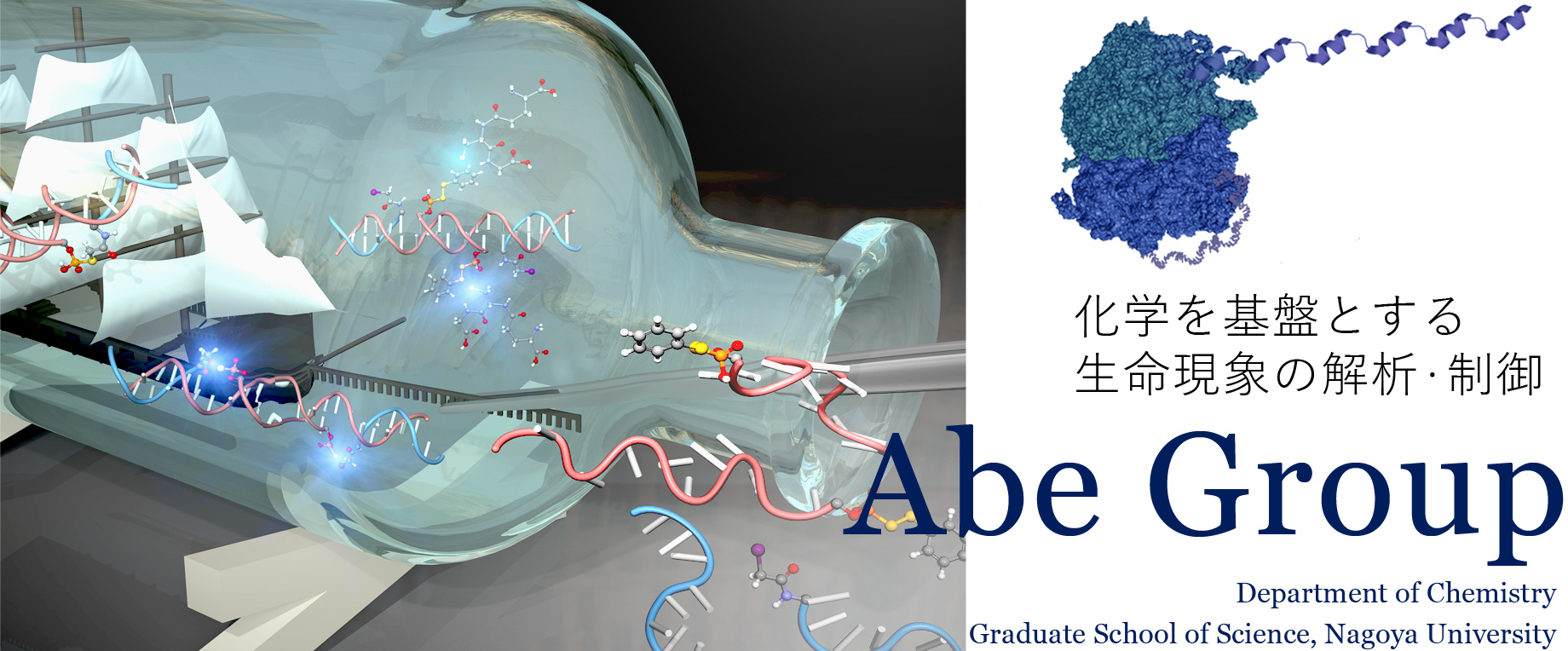 化学を基盤とする生命現象の解析・制御 Abe Group, Department of Chemistry, Graduate School of Science, Nagoya University